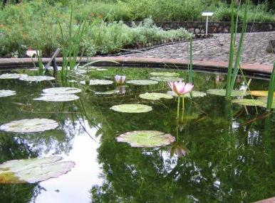 Acupuntura cursos pr cticos de tlahui educa educaci n for Actividades jardin botanico